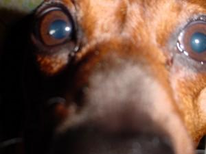The Bookerdog Nose